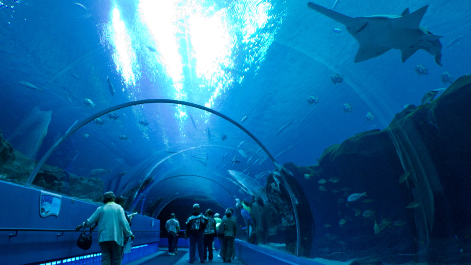 Georgia Aquarium | W Atlanta Downtown